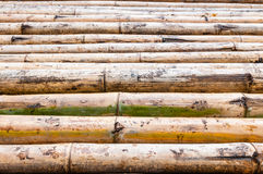 Bamboo background closeup Stock Image