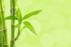 Bamboo background with copy space Stock Image