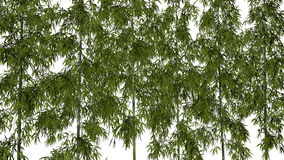 Bamboo background - 3D render Royalty Free Stock Image