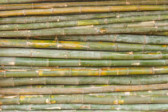 The bamboo. Stock Photography
