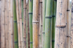 bamboos background Stock Photo