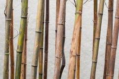 Bamboos background Stock Image