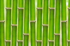 Bamboo background. Fresh bamboo background in garden Stock Photography