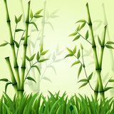 Bamboo background with grass Stock Image
