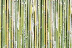 Bamboo background. This is Green bamboo background stock image