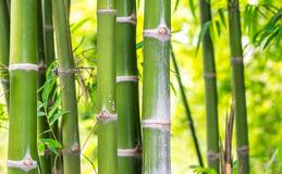 Bamboo for background Royalty Free Stock Image