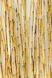 Bamboo Background for Interiors Design Royalty Free Stock Images