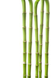 Bamboo background isolated Royalty Free Stock Photography