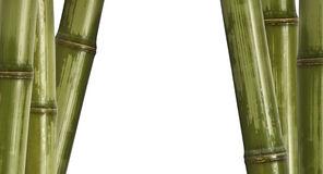 Bamboo background isolated on white Stock Photo