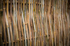 Bamboo background. Stock Images