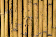 Bamboo background. Texture nice background Stock Photos