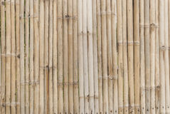 Bamboo background. Thailand Bamboo background and natural royalty free stock images