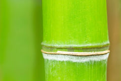 Bamboo background in  tropical forest Stock Images