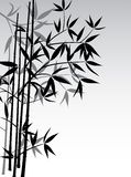 Bamboo background, vector Stock Photo