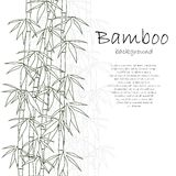 Bamboo background white Royalty Free Stock Photography