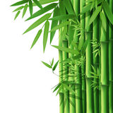 Bamboo Bamboo background Stock Photos