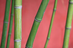 Bamboo, bamboo, tree trunks, plants Stock Images