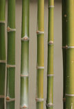 Bamboo. M tree are the culture of asian Royalty Free Stock Photos