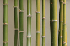 Bamboo. M tree are the culture of asian Royalty Free Stock Images