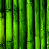 Bamboo bark Stock Photography
