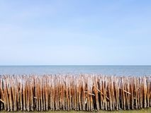 Bamboo barrage made by human and protecting the big wave from the sea or ocean and blue sky with copy space for prevent damage to. Village and mangrove forest royalty free stock image