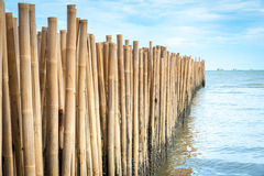 Bamboo barrier royalty free stock photo