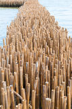 Bamboo barrier stock photo