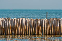 Bamboo barrier for protect from erosion. Selective Focus. Stock Photos