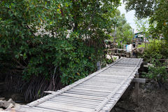 Bamboo  barrier protect the mangrove forest. Stock Photography