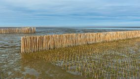 Bamboo barrier and rock dam. Bamboo barrier, protection seawater and wave at the estuary, Bright sky, Bangkok sea view. Mangrove ecological tourism of Thailand royalty free stock photography