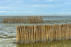 Bamboo barrier and rock dam. Bamboo barrier and rock dam, protection seawater and wave at the estuary, Bright sky, Bangkok sea view. Mangrove ecological tourism royalty free stock images
