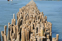 Bamboo Barrier to protect the coast Royalty Free Stock Images