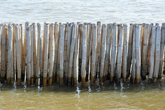 Bamboo Barrier to protect the coast Stock Images