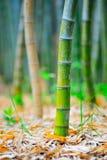 Bamboo Base 02 Stock Photography