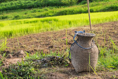 Bamboo Basket Creel Fish. And rice field Royalty Free Stock Image