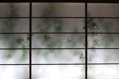 Bamboo Behind Screen. Bamboo growing behind a semi-transparent oriental style wall screen Stock Photo