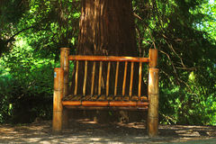 Wooden bench in botanical garden in Batumi Stock Photos