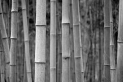 Bamboo in black and white Royalty Free Stock Photos