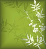 Bamboo and Blossom Stock Image