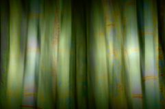 Bamboo blur Royalty Free Stock Photos
