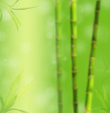Bamboo blur background Royalty Free Stock Images