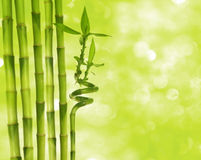 Bamboo and boheh Royalty Free Stock Photo