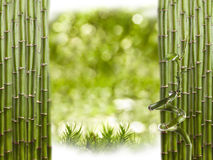 Bamboo Border Royalty Free Stock Image