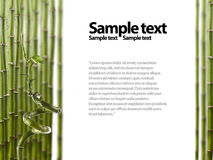 Bamboo Border Royalty Free Stock Photography