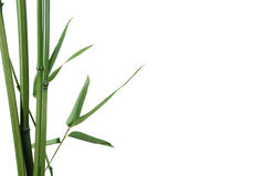 Bamboo border. Border of bamboo-leaves isolated on white with copy-space Royalty Free Stock Images