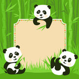 Bamboo border and fanny pandas Stock Image