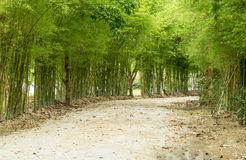 Bamboo both side of the road. Royalty Free Stock Image