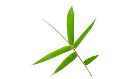 Bamboo(Bougainvillea glabra Choisy)Plant, leaf form and texture Stock Photo