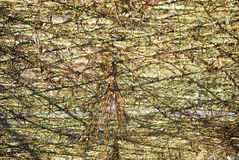Bamboo branch background. With earth tone colour Stock Photos