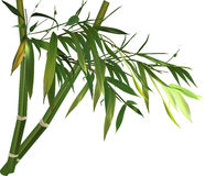 Bamboo branch with green leves isolated on white Royalty Free Stock Image
